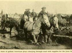 Equine Welfare Charity & World War One Centennial Commission